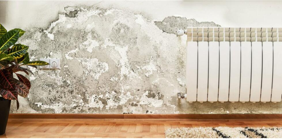 Mold in the Bedroom